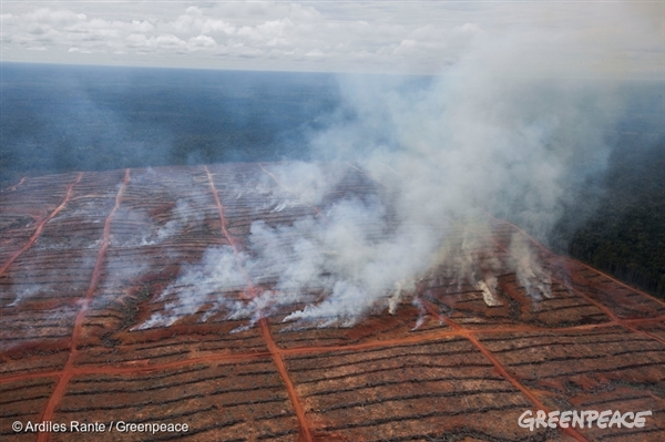 Smoke rises from burning wood rows in a concession owned by PT Berkat Citra Abadi, part of the Korindo Group. Rainforest has recently been cleared from an area of the concession, in Merauke district, as part of the development of an oil palm plantation. 26 Mar, 2013 © Ardiles Rante / Greenpeace