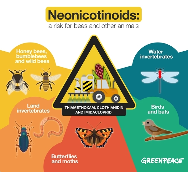 Neonicotinoids: a risk to bees and other animals. 09/01/2017 ©