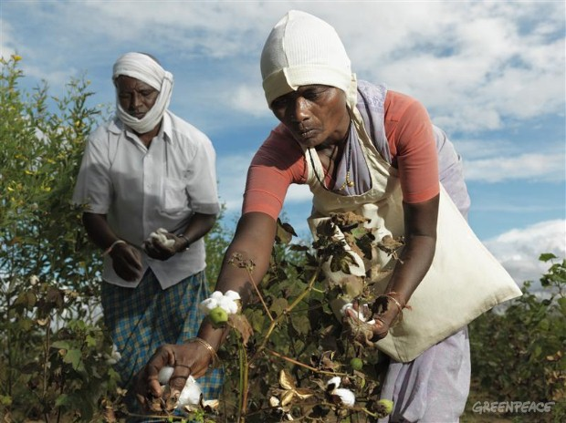 Organic Cotton Farmers in India