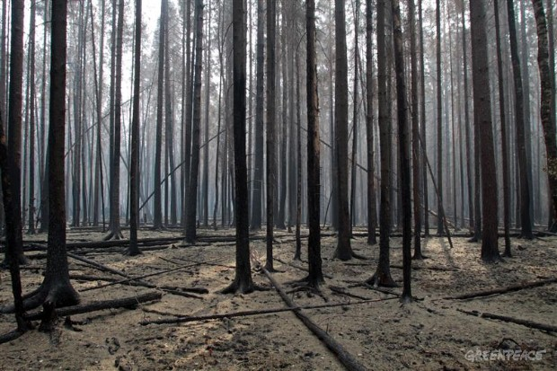 Burned Forest near Moscow, Russia