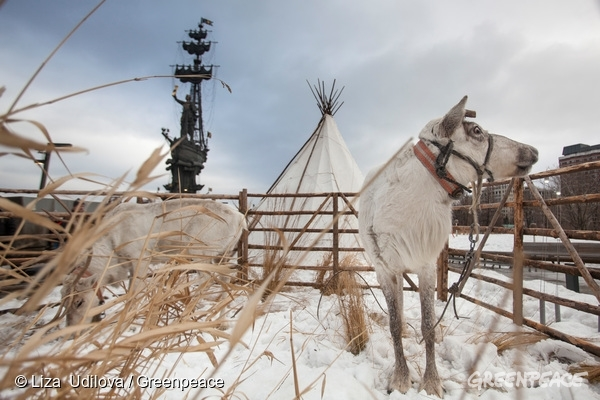Reindeer herders have built corral and placed their traditional tent in the center of Moscow to show their culture and way of life to the common folk and ask for their support against oil industry.  © Liza Udilova / Greenpeace