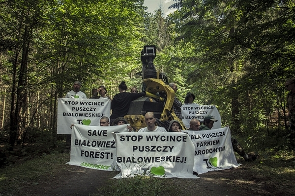 Fifth blockade of the Białowieża Ancient Forest Photo Rafał Wojczal, 2017