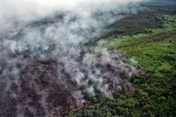 Aerial view of fires at the forest and palm oil plantation in peatland area of Pangkalan Terap, Teluk Meranti, Pelalawan regency, Riau.