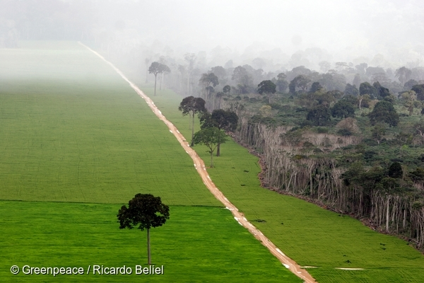 Soya plantation in the Amazon rainforest. 13 May, 2006  © Greenpeace / Ricardo Beliel