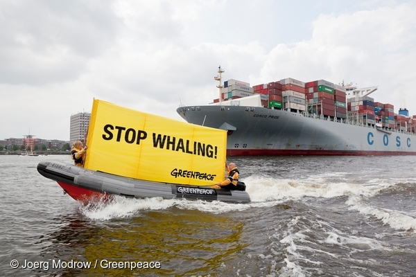 "Greenpeace activists protest against the transport of fin whale meat transiting through the port of Hamburg. The 336 meter long cargo ship freighter ""Cosco Pride"" (Seaspan Corp.) is carrying the whale meat from Iceland to Japan.  5 Jul, 2013 © Joerg Modrow / Greenpeace"