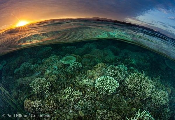 Sunrise Over Reef in Komodo National Park. 17 May, 2014 © Paul Hilton / Greenpeace
