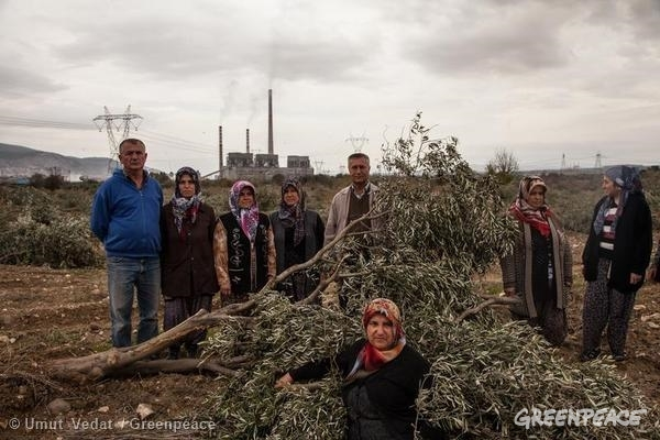 Kolin Illegally Destroys Olive Grove for Coal Expansion in Turkey. 9 Nov, 2014 © Umut Vedat / Greenpeace