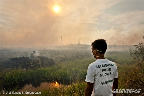 A Greenpeace investigator documents fires on recently cleared peatland in the PT Rokan Adiraya Plantation oil palm plantation near Sontang village in Rokan Hulu, Riau, Sumatra. 23 Jun, 2013
