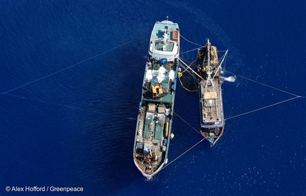 Illegal Purse Seine Fishing Vessel. 24 Nov, 2011 © Alex Hofford / Greenpeace