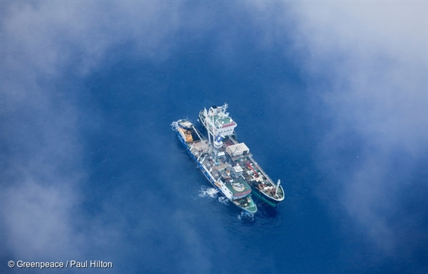 Fishing Vessels in the Pacific Ocean. 17 Sep, 2009 © Greenpeace / Paul Hilton