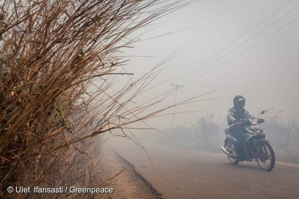 A motorist passes through the hazy road caused by forest fires in Sungai Pelang, South Matan Hilir subdistrict, Ketapang district, West Kalimantan province. 21 Sep, 2015
