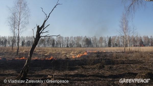 Forest fires in the contaminated Bryanks region. 07/04/2016 © Vladislav Zalevskiy / Greenpeace