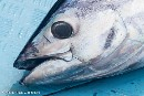 Greenpeace: Only five out of 23 tuna canneries in Southeast Asia make the grade