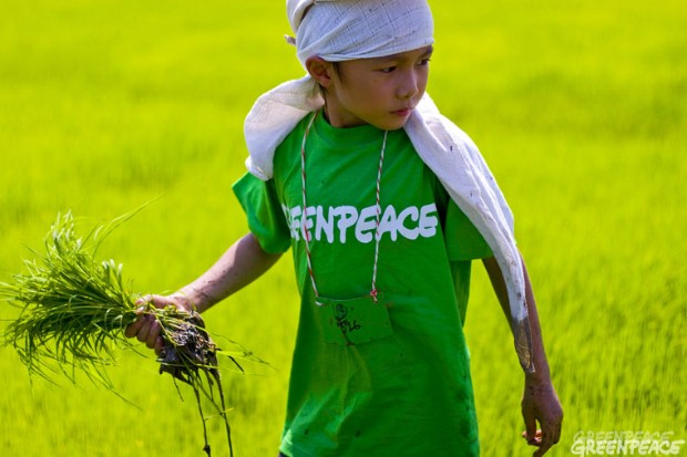 Planting at the 'art' rice field, Ratchaburi