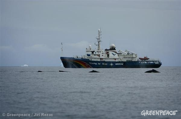 Humpback whales and the Esperanza