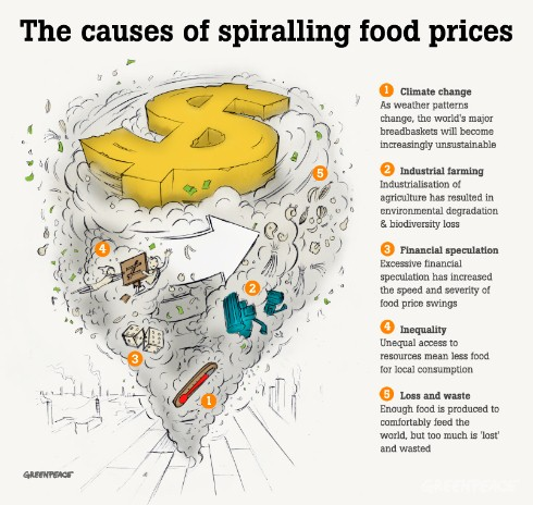 Causes of the food crisis