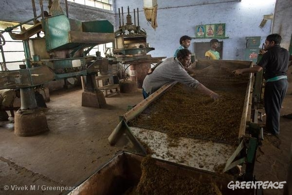 Tea separator at work at the Singara tea factory 11/23/2013 © Vivek M / Greenpeace