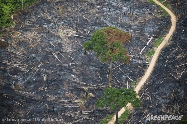Burned area within the Indigenous Land of Cachoeira Seca.