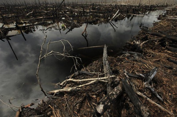 Destroyed peatland