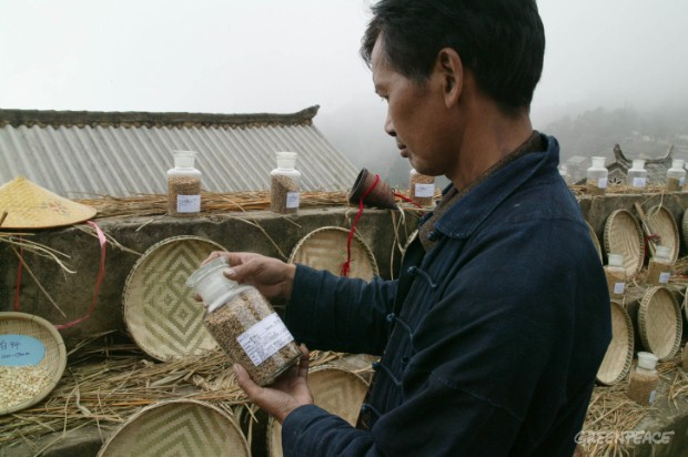 A farmer carefully looking at different kinds of seeds in the seed exchange festival.