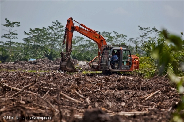 An excavator constructs a canal in recently cleared land in an oil palm concession owned by PT Andalan Sukses Makmur (PT ASMR) concession, a subsidiary of Bumitama Agro Ltd.  (2013)