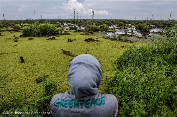 A Greenpeace investigator documents the devastation of a company-identified 'No Go' area of peatland in the PT Bumi Sawit Sejahtera (IOI) oil palm concession in Ketapang, West Kalimantan (2016).