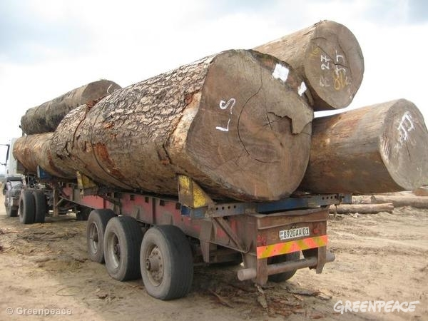 Unmarked timber on truck in DRC. Unmarked timber is observed on a truck in the private port of the Lebanese-owned company Cotrefor in Kinkole.