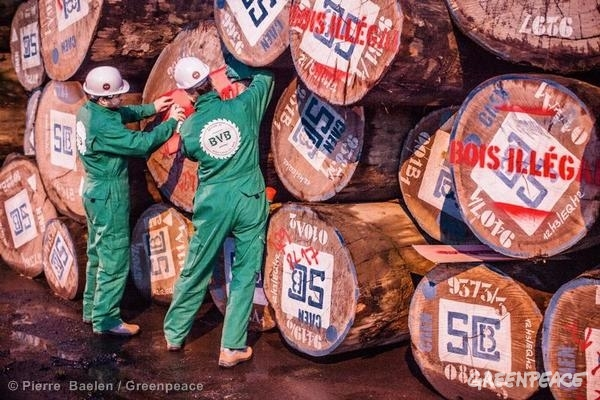 "Activists from Greenpeace France uncover a shipment of illegal timber from the Democratic Republic of Congo (DRC) in the French port of Caen. They paint the message ""Bois Illégal"" on the logs and also seize a log as evidence. This timber is sold by Sicobois in DRC and is illegally imported by French group Peltier Bois. Greenpeace is calling on the French Ministry of Agriculture to take appropriate legal action and seize the illegal timber."