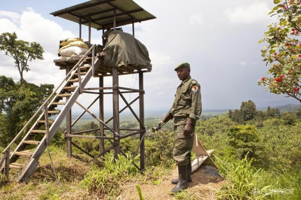 ICCN Ranger in Virunga National Park