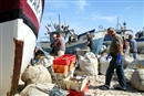 Baltic low impact fishermen: Strength in unity