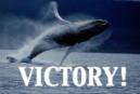 A victory for the whales