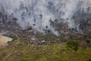 Forest fires to clear land for cattle