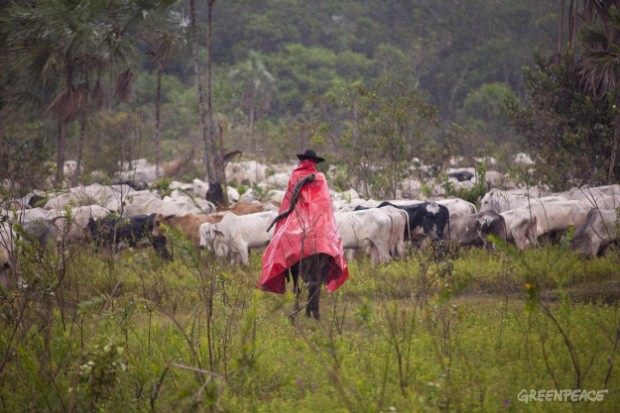 Cattle farm at Estancia Bahia, Brazil