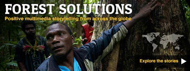 Forest solutions - multimedia storytelling