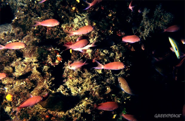 Underwater shot showing fish swimming among coral reefs at the bottom of the sea.