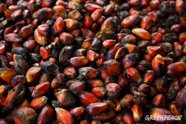 "These seeds are ready for the press. The fruit itself is turned into ""Palm oil,"" while the nut is used for ""Kernel oil."" This is the local variety grown by smallholders. (Copyright Jan-Joseph Stok / Greenpeace)"