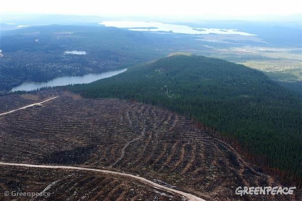 Clear-cut Region of Boreal Forest. A contrasting view between an area that was clear-cut and intact Boreal Forest on René Levasseur Island. 09/07/2005 © Greenpeace