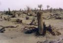 Once productive lands destroyed by desertification