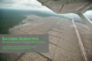 Saving Sumatra (video)