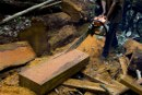 Illegal loggers cut a fallen Iron Wood tree