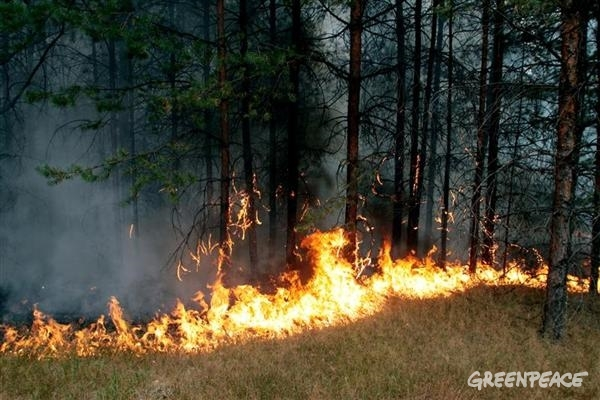 Forest Fires in Russia. 08/11/2010 © Greenpeace / Igor Podgorny