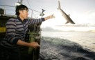 Vietnamese crew member releases a shark back into the ocean