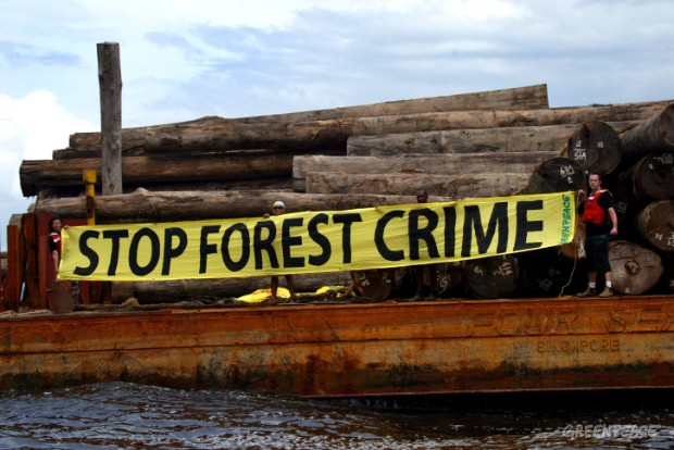 Greenpeace identifies suspected illegal logs on a barge off the coast of central Kalimantan in Indonesia.  These logs came from an area including the Tanjung Puting National Park -- home of dwindling numbers of orang-utans where logging is forbidden.