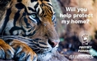 The movement for tiger-friendly products starts today. Are you in?