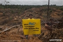 Winning! Colgate to end its role in forest destruction