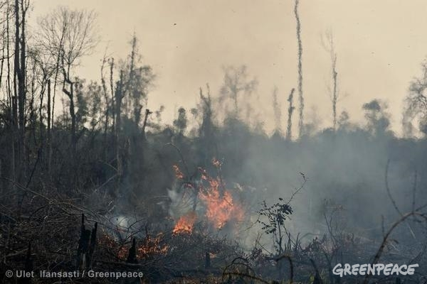 Forest Fires in Sumatra. 06/23/2013 © Ulet Ifansasti / Greenpeace