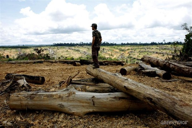 Deforestation in East Kalimantan
