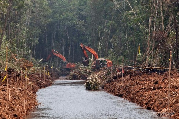 Forest Clearing Witnessed By Activists