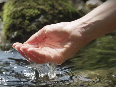 Thumbs up for controversial Greenpeace TV ad