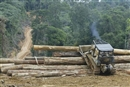 Not sustainable – Malaysia's PEFC-endorsed timber just not good enough
